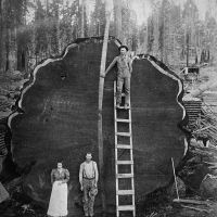 Sequoia National Park, Californie, ca. 1910. Fotograaf onbekend. Collectie Library of Congress