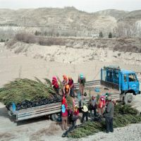 Tree planters beneath reforested hills. Southern Gansu, China. Photo Lucas Oleniuk, 2008. Collection  Lucas Oleniuk