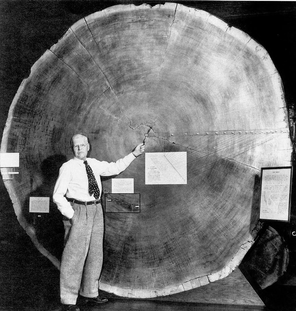 tree ring dating oldest How can scientists tell the oldest possible age of this painting the wood was split radially so that tree rings are visible and dates for the paintings date by counting tree rings it is possible to find the number of years the.